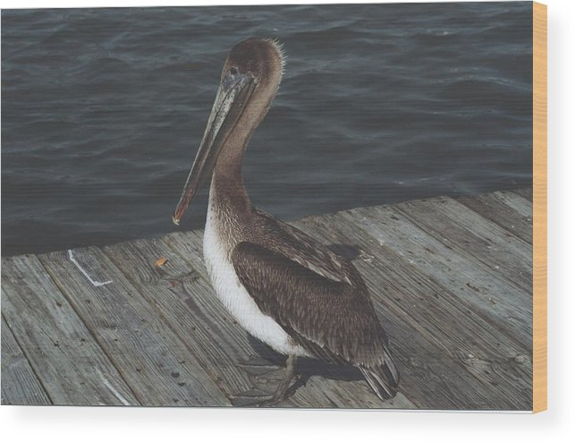 Bird Wood Print featuring the photograph Brown Pelican On Pier 2 by Wendell Baggett
