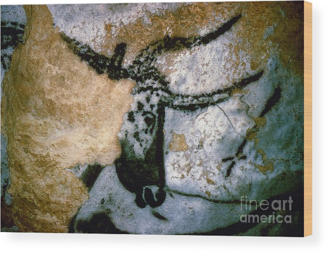 Bull Wood Print featuring the photograph Bull: Lascaux, France by Granger