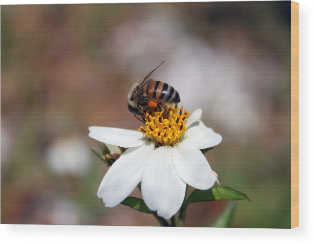 Bee Photography Wood Print featuring the photograph Busy Bee 3 by Evelyn Patrick
