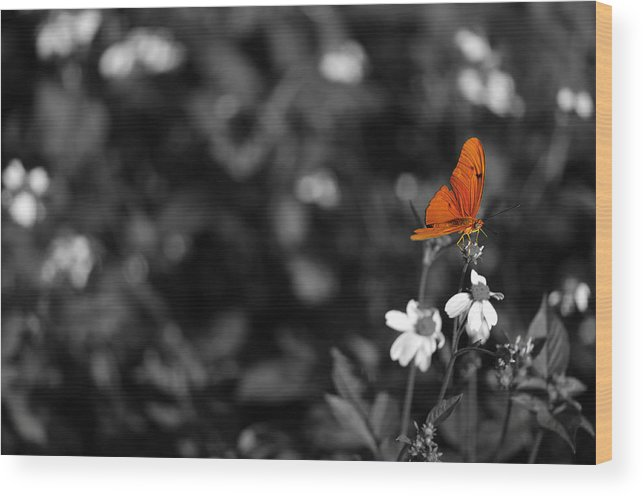 Orange Wood Print featuring the photograph Butterfly by Mandy Wiltse