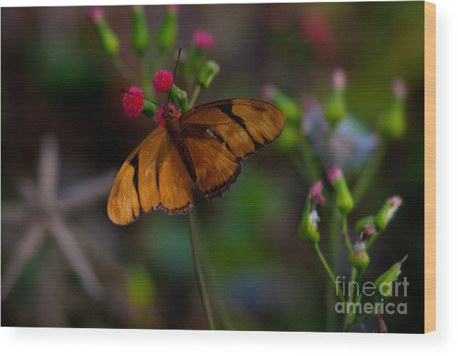 Fine Wood Print featuring the photograph Butterfly by Michael Herb