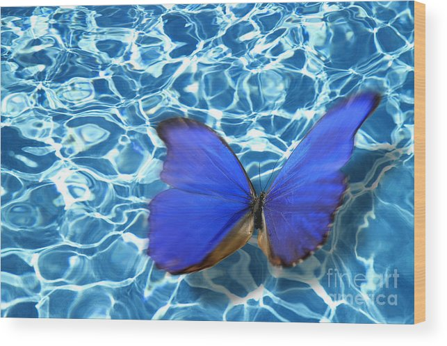 Animals Wood Print featuring the photograph Butterfly by Tony Cordoza