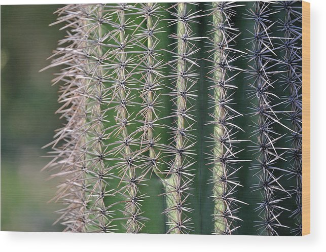 Arizona Wood Print featuring the photograph Cactus Thorns by Tom Dowd