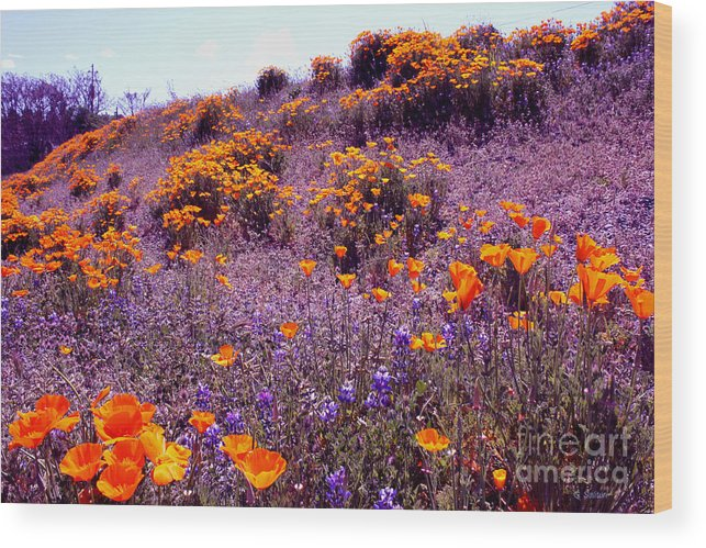 Poppy Wood Print featuring the pyrography California State Flower Study by Gail Salitui