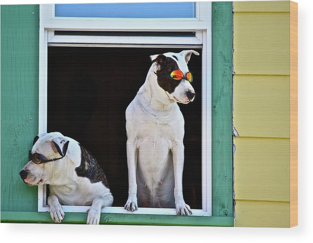 Animals Wood Print featuring the photograph Canine Comedians by Diana Hatcher
