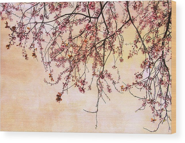 Cherry Blossoms Wood Print featuring the photograph Canopy by Rebecca Cozart