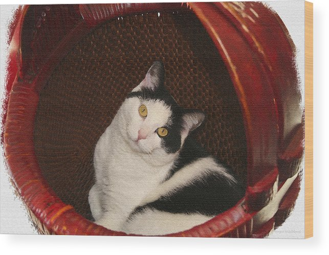 Cat Wood Print featuring the photograph Cat In A Basket by Margie Wildblood
