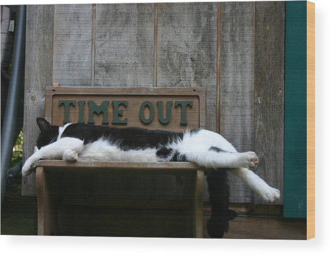 Cat 2 Wood Print featuring the photograph Cat Time Out by Kevin Dunham