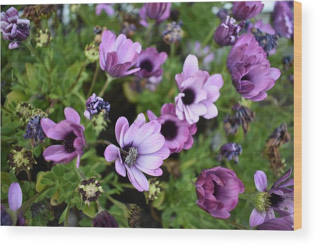 Flowers Wood Print featuring the photograph Changes by Cheryl Calhoun