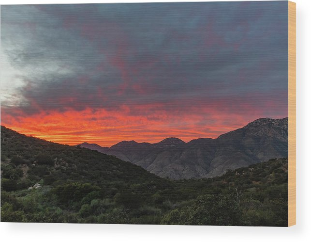 California Wood Print featuring the photograph Chaparral Dreams by TM Schultze