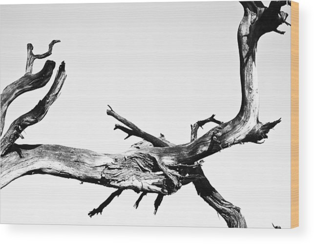 Tree Wood Print featuring the photograph Character by Tamar Toerien