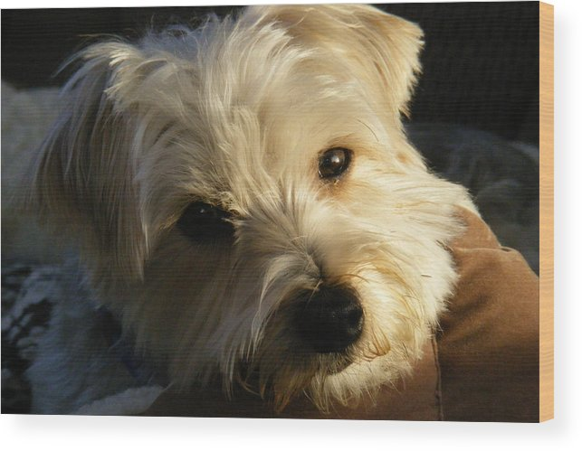 Dog Wood Print featuring the photograph Charlie by Ed Smith