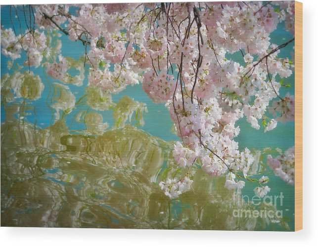 Japanese Wood Print featuring the photograph Cherry Blossoms Close Up Six by Susan Isakson