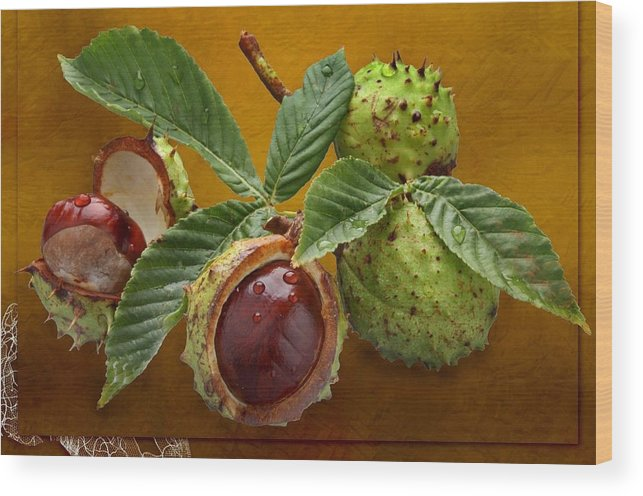 Chestnuts Wood Print featuring the photograph Chestnuts 3 by Manfred Lutzius