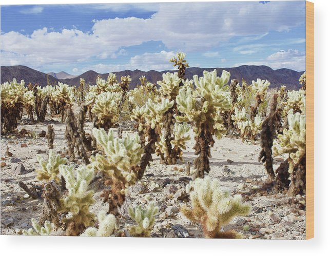 Cactus Wood Print featuring the photograph Cholla Desert Garden by Thomas Anderson