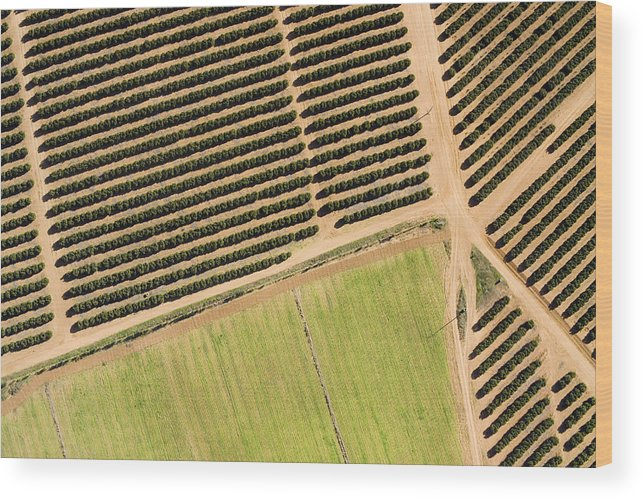 Landscape Wood Print featuring the photograph Citrus Farms In Moroccos Productive by Michael Fay