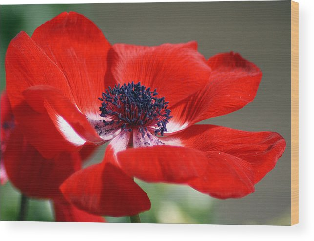 Red Wood Print featuring the photograph Close Proximity by KatagramStudios Photography