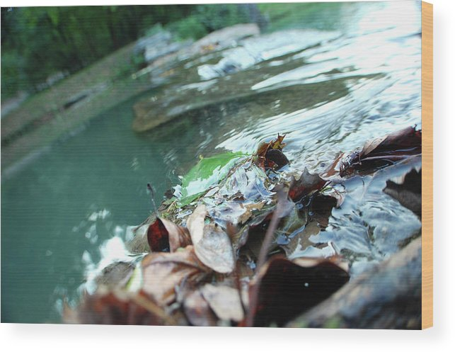 Nature Wood Print featuring the photograph Cluster Of Leaves by Jacqueline Dickens