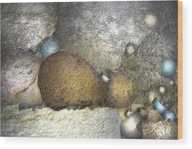 Photopainting Wood Print featuring the digital art Cocoons by Helga Schmitt