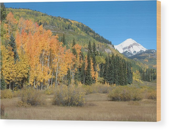 Aspen Wood Print featuring the photograph Colorado Gold by Jerry McElroy