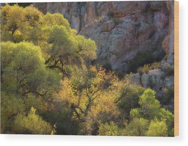 Arizona Wood Print featuring the photograph Colors Of Autumn In The Sonoran by Saija Lehtonen