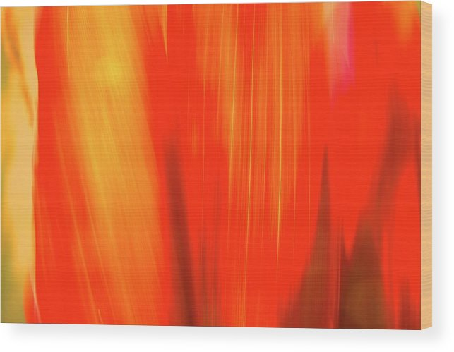 Plants Wood Print featuring the photograph Colours Of Cordyline by Gary Brinkman
