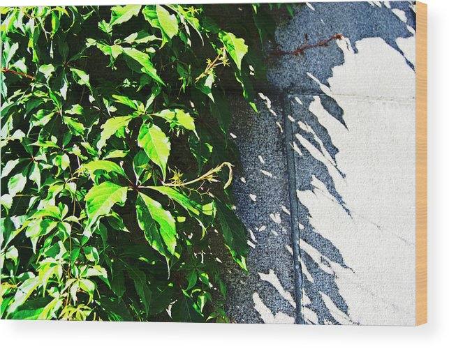 Concrete Wood Print featuring the photograph Concrete Green by Tinto Designs