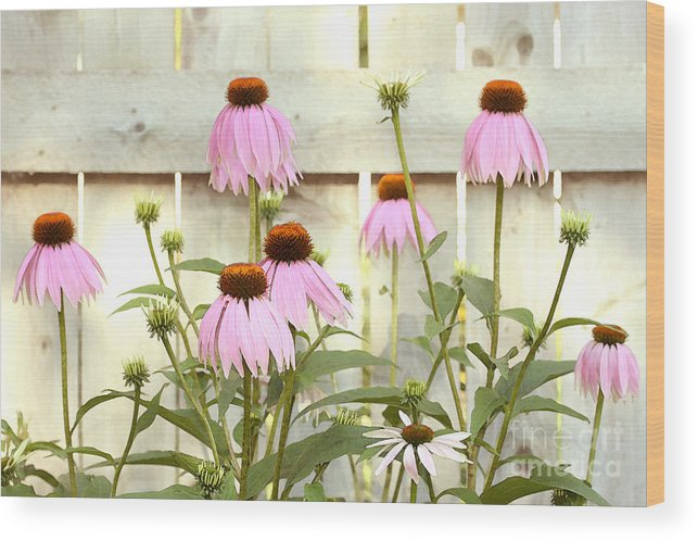 Flower Garden Wood Print featuring the photograph Coneflower Patch by Steve Augustin
