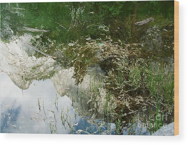 Mirror Lake Wood Print featuring the photograph Confusion by Kathy McClure