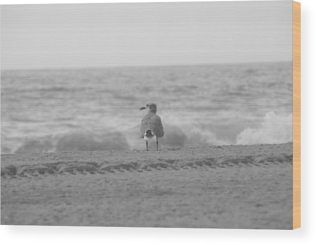 Ocean Wood Print featuring the photograph Contemplative Gull Bw by Eric Dimeck