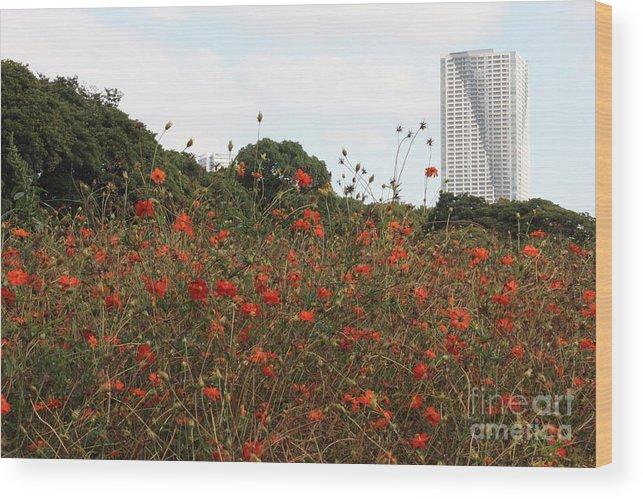 Tokyo Wood Print featuring the photograph Cosmos In Tokyo Garden by Carol Groenen