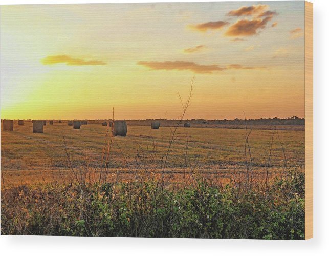 Country Wood Print featuring the photograph Country Pasture At Sunset by HH Photography of Florida