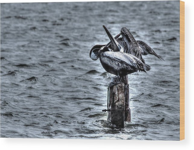 Pelicans Wood Print featuring the photograph Crossed Bills by Doc Hafferty