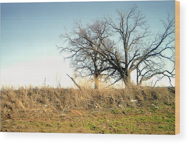 Wood Print featuring the photograph Dead Tree by Chad Taber