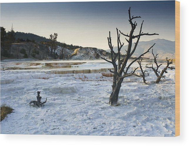 Mammoth Hot Springs Wood Print featuring the photograph Dead Wood Springs by Chad Davis