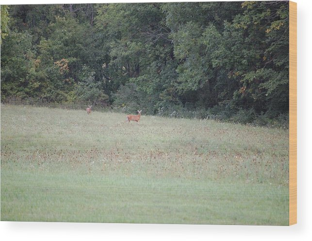 Wildlife Wood Print featuring the photograph Deer Looking Up Towards Me by Richard Botts