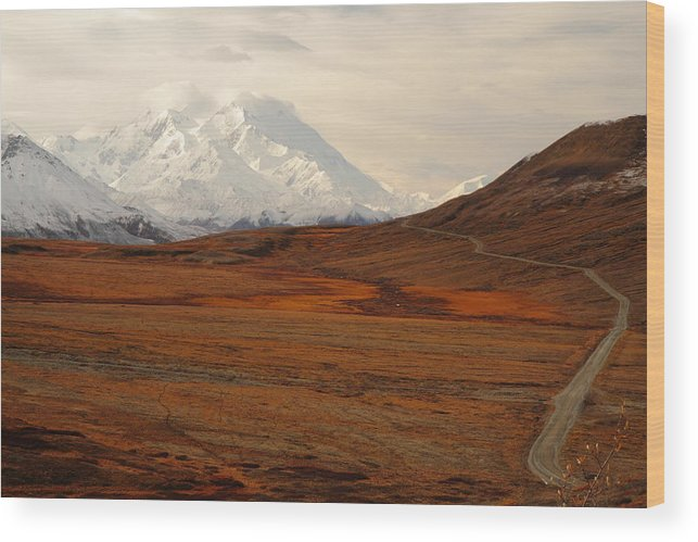 Denali Wood Print featuring the photograph Denali And Tundra In Autumn by Steve Wolfe