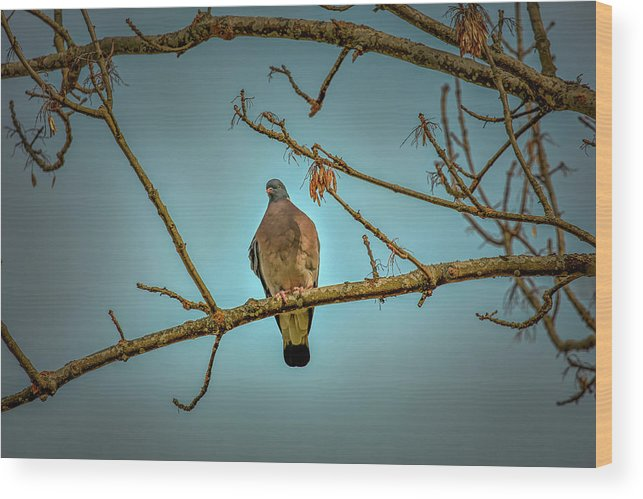 Dove Wood Print featuring the photograph Dove #g2 by Leif Sohlman