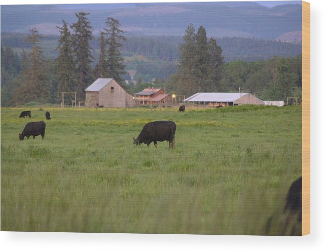 Farm Wood Print featuring the photograph Down On The Farm by Angi Parks