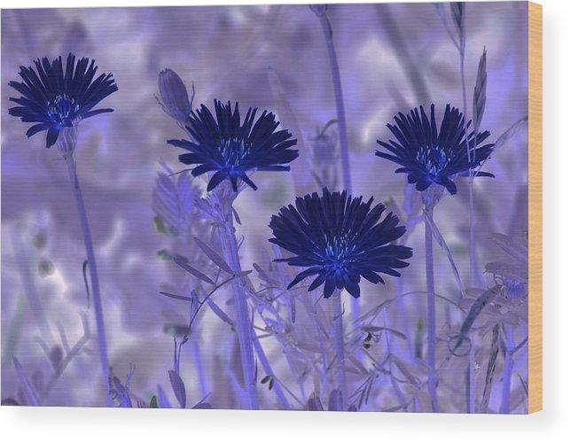 Nature Wood Print featuring the digital art Dream Fields by Tom Rickborn