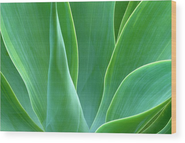 America Wood Print featuring the photograph Dream Green by Eggers Photography