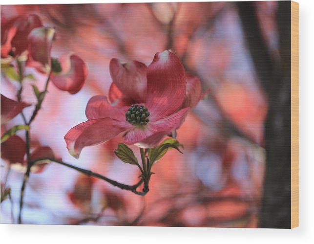 Dreamy Dogwood Wood Print featuring the photograph Dreamy Dogwood by Lynn Hopwood