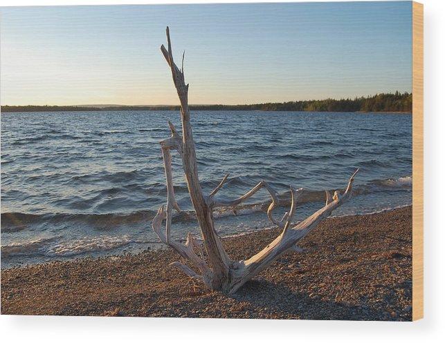 Water Wood Print featuring the photograph Driftwood by Donald Mac Fadyen