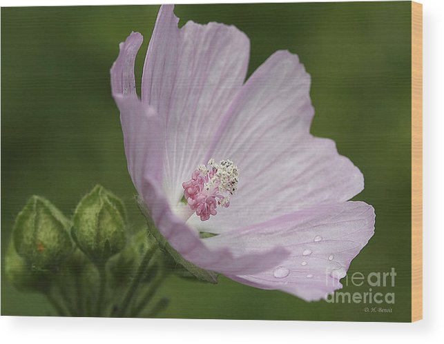 Flower Wood Print featuring the photograph Drops Of Dew by Deborah Benoit