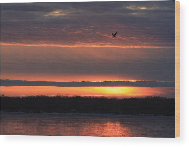 Mississippi River Wood Print featuring the photograph Eagle Over Mississippi by Dave Clark
