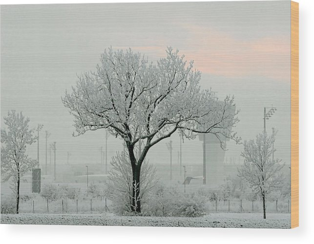 White Wood Print featuring the photograph Eerie Days by Christine Till