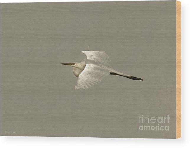 Bird Wood Print featuring the photograph Elusive Giant Egret by Deborah Benoit