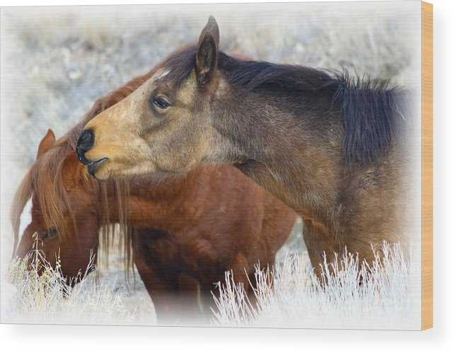 Wild Wood Print featuring the photograph Enchanting by Gene Praag