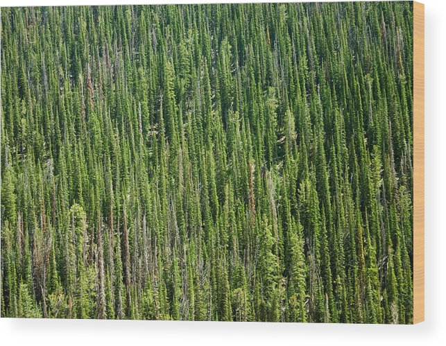 Canopy Of Trees Wood Print featuring the photograph Endless Forest by Brendon Bradley