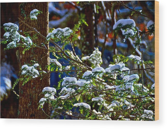 Forest Wood Print featuring the photograph Enlightened Winter by Dale Chapel